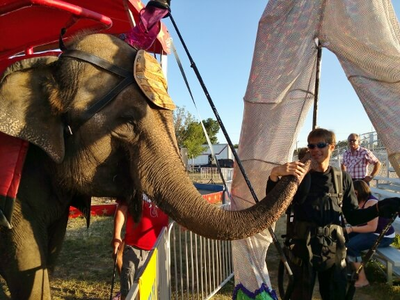 The elephant didn't mind that Matt was wearing a Giant Parade Puppet, as long as Matt kept feeding him !